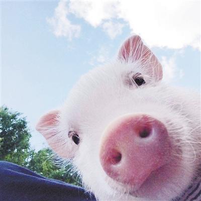 动物图像采集更不可控,无法让动物自觉的将脸部较长时间稳定在摄像头